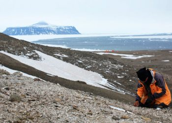 Encuentran en la Antártida un primer fósil de una rana y resulta similar a las del centro de Chile