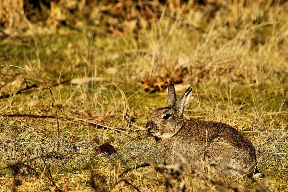 Organizaciones ecologistas trasladan al Comité de Caza las propuestas para que no se use la caza para el control de especies silvestres