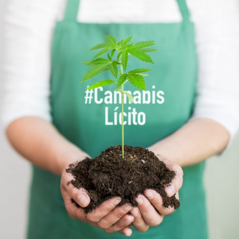 El movimiento cannabico lanza hoy la campaña #CannabisLícito