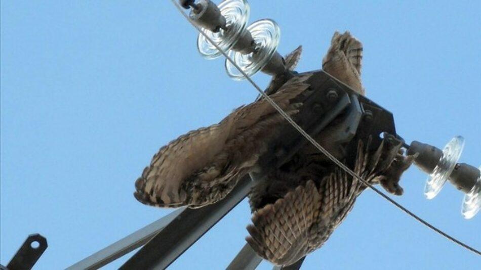 Carta al al Ministerio de Transición Ecológica y el Reto Demográfico una serie de medidas para la protección de aves  electrocutadas en el Estado Español