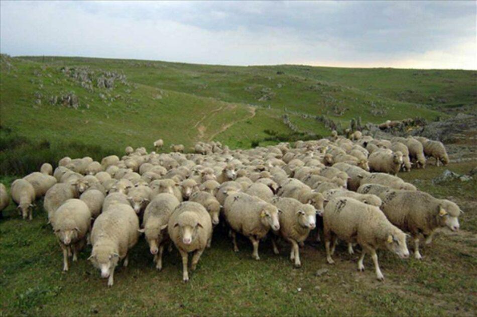 La pandemia ha puesto de manifiesto que carecemos de una soberanía alimentaria, siendo Castilla y León una comunidad eminentemente agrícola y ganadera