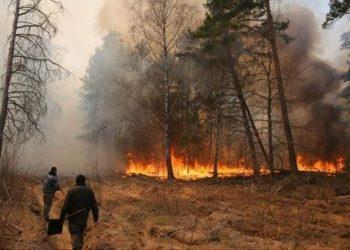 Los incendios en la zona de exclusión de Chernóbil destruyen más de 11.000 hectáreas forestales