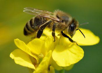 Ecologistas en Acción: Detener la pérdida de biodiversidad es esencial para protegerse de futuras pandemias