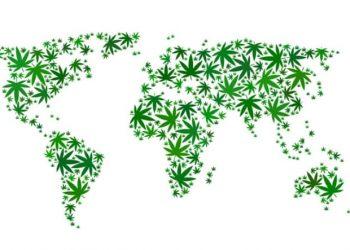 Manifiesto Marcha Mundial de la Marihuana 2020: Madrid Global