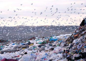 COVID–19: Alianza Residuo Cero reclama al Gobierno que no ceda ante la industria del plástico y apueste por una gestión eficaz de los residuos