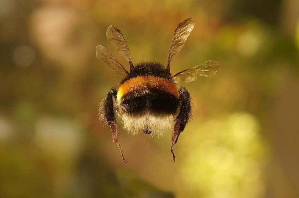 FAO: «Compromiso con las abejas»