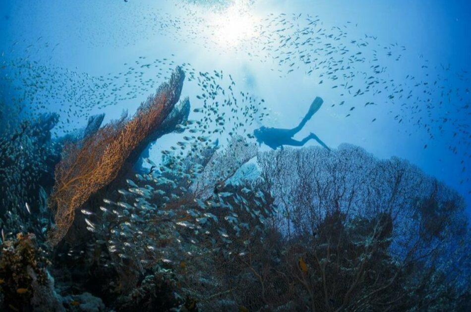 Detener la pérdida de biodiversidad es esencial para protegerse de futuras pandemias