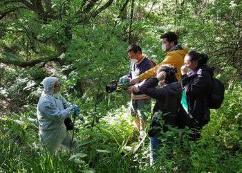 La madera de algunos bosques de Bizkaia y Huesca contienen altas concentraciones de lindano