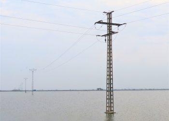 CGT denuncia a Iberdrola por una electrocución de un águila pescadora en l'Abufera de València