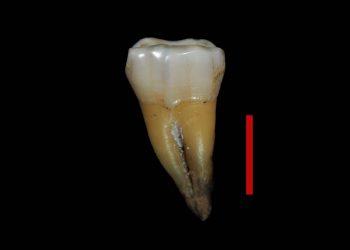 Un diente hallado en Bulgaria confirma la primera presencia de humanos modernos en Europa