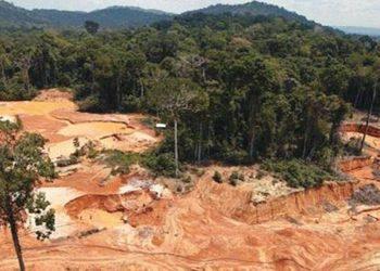 Amazonía habría perdido 19.600 millones de árboles en los últimos meses