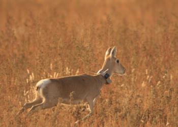 Confinamiento, un experimento único para estudiar el impacto humano en la vida salvaje