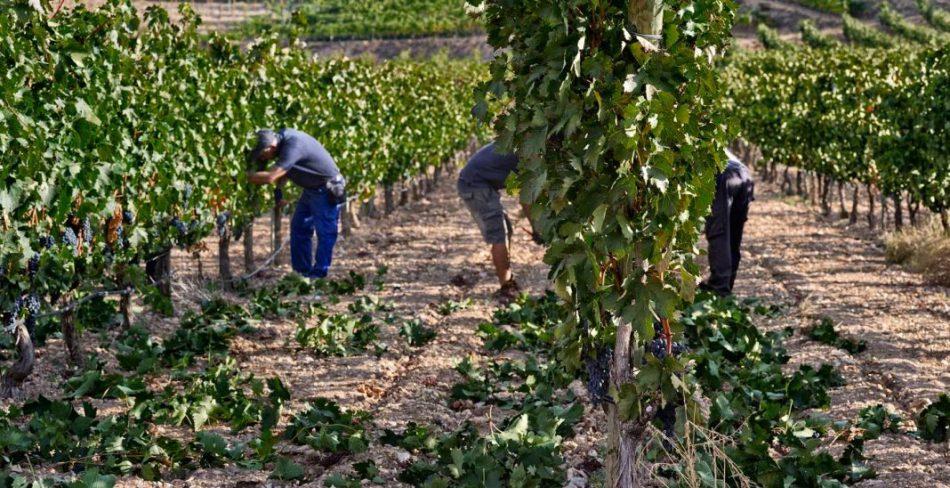 El Gobierno flexibiliza los requisitos exigidos para el cobro de ayudas de la PAC en los sectores de frutas y hortalizas y del vino