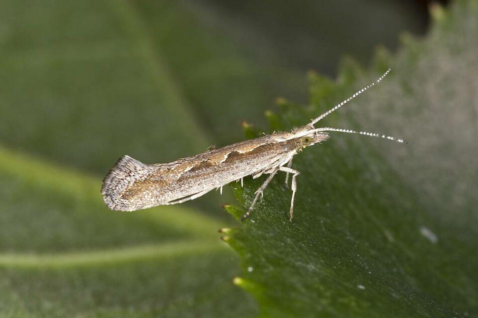 La crisis climática amenaza más de lo que se pensaba a los insectos