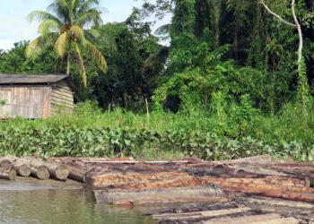 Alerta por el impacto en las comunidades campesinas del aumento de la deforestación en regiones tropicales