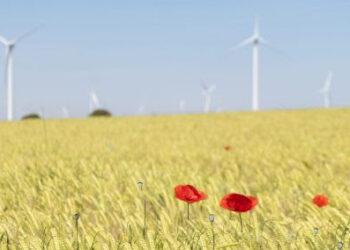 Ahora o nunca. Greenpeace pide sentido común para transformar y modernizar el sistema en clave verde y social