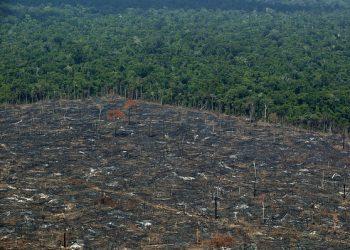 Denuncia la importación española de carne procedente de la deforestación de la Amazonia