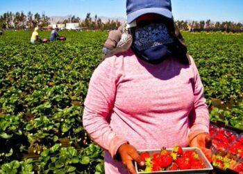 APDHA y AMDH piden el regreso inmediato a Marruecos de más de 7.000 trabajadoras agrícolas varadas en Huelva