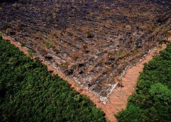 En el estado de Maranhão, el 80% de la selva amazónica ya ha sido devastada