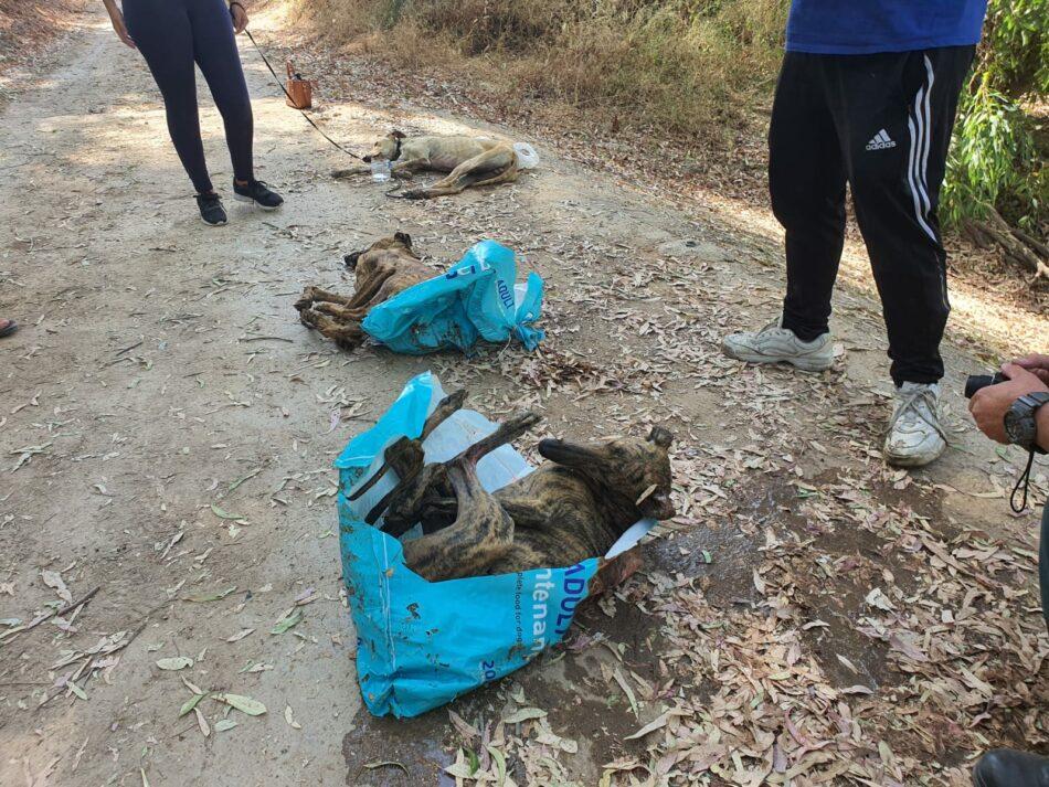 Brutal caso de maltrato animal: aparecen tres galgos apaleados y metidos en sacos en un río en El Arahal (Sevilla)