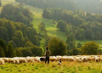 Amigos da Terra considera que a agricultura e gandería sostibles son medidas claves para frear a incidencia de futuras pandemias