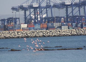 El Comité de Peticiones del Parlamento Europeo realizará una investigación preliminar sobre la Paralización del Plan de Infraestructuras del Puerto de la Bahía de Algeciras