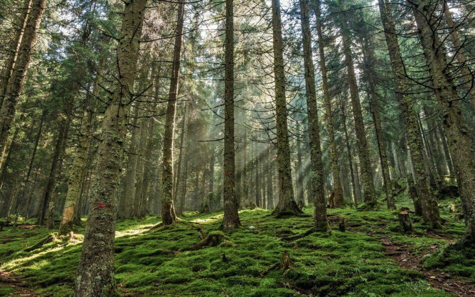 Los satélites detectan un brusco aumento de la explotación forestal en Europa
