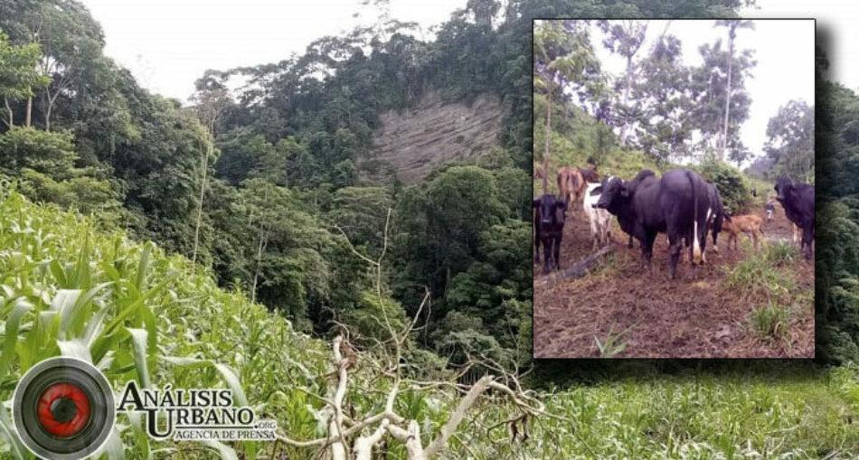 Más de 300 paramilitares se suman al Plan Mil de las AGC desde el sur de Córdoba hacia el norte de Ituango