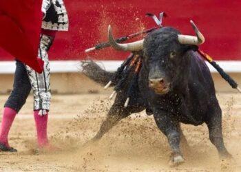 Más de 70 colectivos instan en una carta abierta al Gobierno de Aragón a no destinar fondos públicos a la tauromaquia