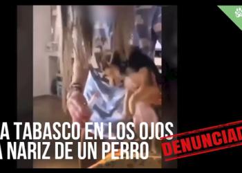 PACMA denuncia el maltrato a un perro al que echan tabasco en los ojos
