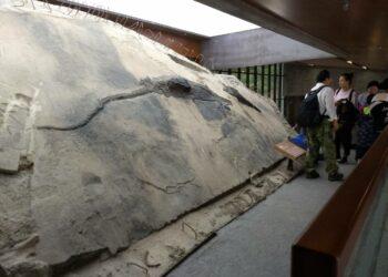 El festín de un reptil del Triásico cambia lo que sabemos de los depredadores prehistóricos