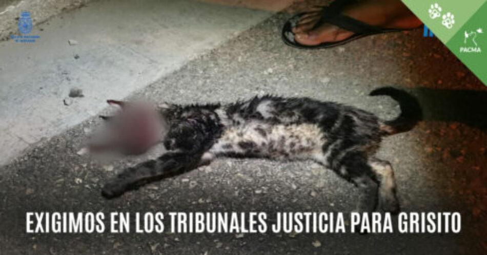 PACMA se personará como acusación particular en el caso del gato torturado y matado en Manacor