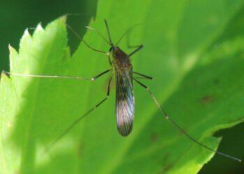 Las siete claves del virus del Nilo Occidental: qué es, qué lo transmite y cómo evitarlo