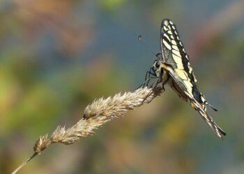 Salvemos Cabana prepara un nuevo catálogo sobre la biodiversidad de la Costa da Morte