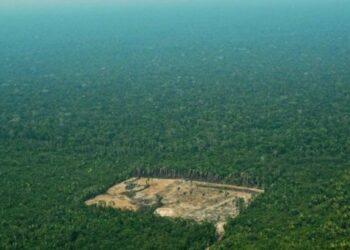 Concentración por la selva amazónica en Málaga