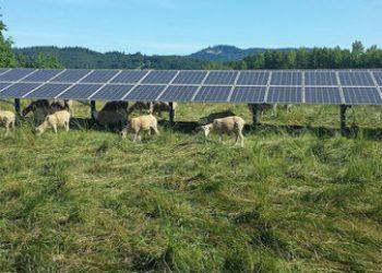 EQUO Cádiz VERDES advierte de la inexistencia de un Plan para la implantación de paneles solares en tierras agrícolas/ganaderas