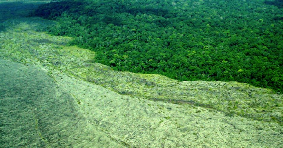 Cumbre de la ONU sobre biodiversidad: Amigos de la Tierra insta a los líderes mundiales a respaldar normas vinculantes para evitar que las corporaciones destrocen el mundo natural