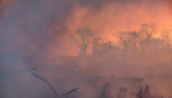 Ecologistas en Acción exige medidas drásticas y urgentes para detener la pérdida de biodiversidad