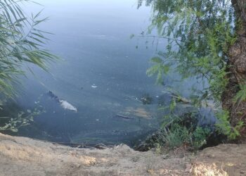 Adelante Sevilla alerta de la existencia de peces muertos, malos olores y suciedad en los estanques del Parque Miraflores