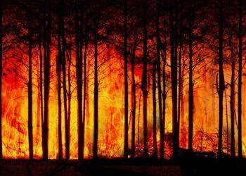 O problema dos incendios forestais segue sen abordarse a nivel galego, denuncia a SGHN