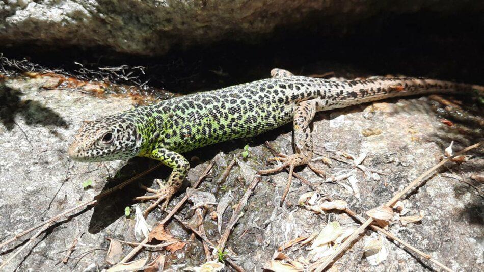 La crisis climática envejece a peces, anfibios y reptiles