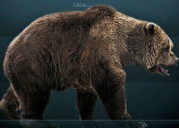 Hallan en Rusia los restos intactos de un oso de las cavernas