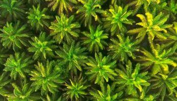 Casi el 60 % de la ciudadanía española quiere eliminar la palma y la soja del biodiésel