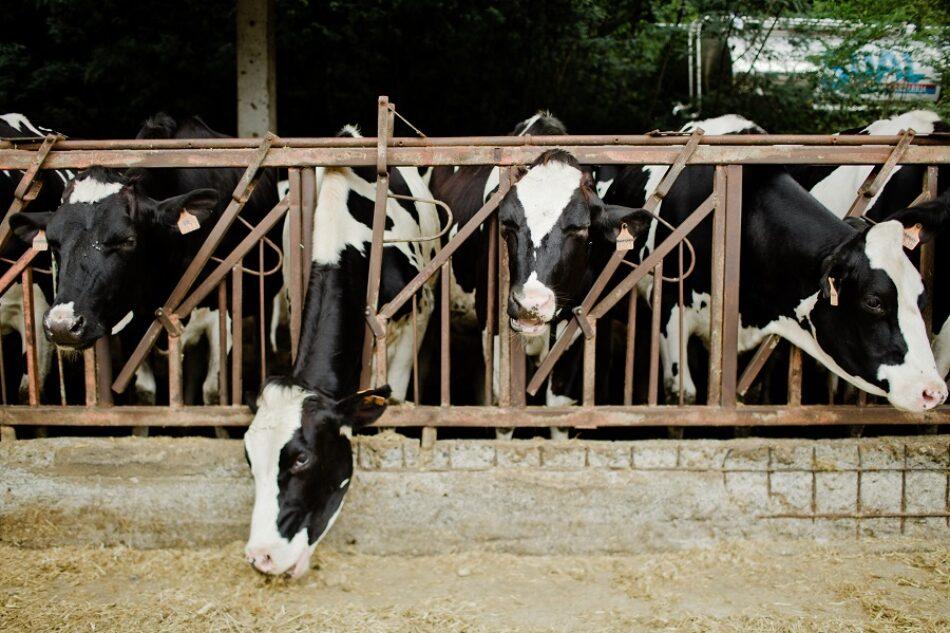 """""""No toda la carne que consumimos impacta igual en el cambio climático"""" afirma un nuevo estudio publicado hoy"""