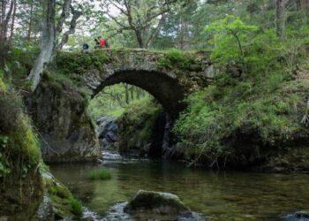 Ecologistas en Acción solicita la expropiación del Pinar de los Belgas y su inclusión en el Parque Nacional de Guadarrama