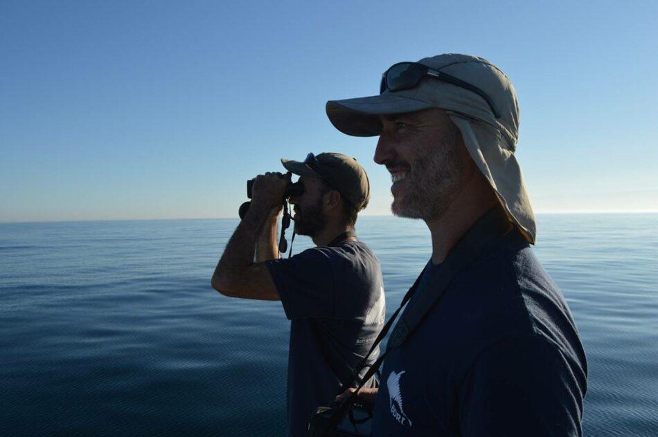 """Bruno Díaz López, director del Instituto de Investigación Bottlenose Dolphin: """"Se le está dando repercusión mediática al comportamiento de una o dos orcas"""""""
