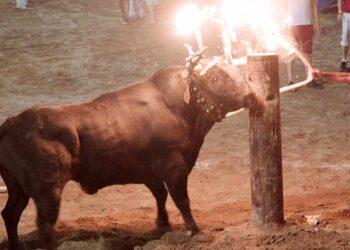 El PSOE pacta con el PP para traer toros embolados y engosados a la Comunidad de Madrid