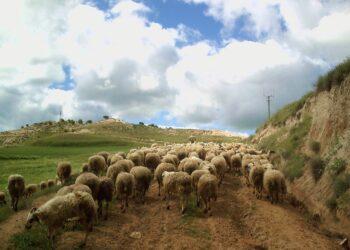 Unidas Podemos plantea incorporar un registro de contratos en la Ley de Cadena Alimentaria para garantizar precios justos para el campo