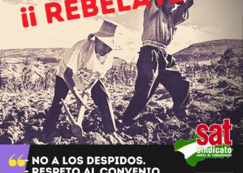 El SAT convoca concentraciones el 27N en Castell de Ferro (Granada) y en El Ejido (Almería): «¡Al campo con derechos!»