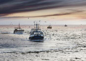 España pide a la Comisión certidumbre en la fijación definitiva de las cuotas de pesca con Reino Unido para 2021